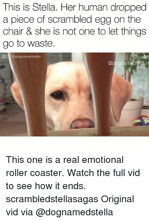 Memes, Watch, and Chair: This is Stella. Her human dropped  a piece of scrambled egg on the  chair & she is not one to let things  go to waste.  E @dognamedstella  @bark This one is a real emotional roller coaster. Watch the full vid to see how it ends. scrambledstellasagas Original vid via @dognamedstella