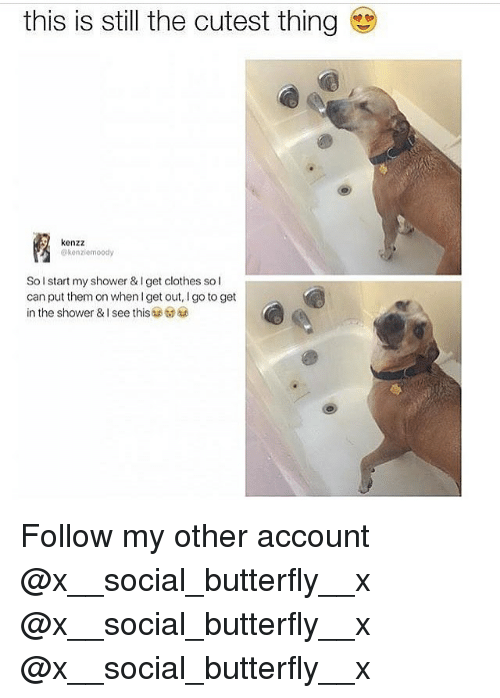 Clothes, Memes, and Shower: this is still the cutest thing  kenzz  @konziemoody  Sol start my shower & I get clothes sol  can put them on whenget out, I go to get  in the shower & I see this Follow my other account @x__social_butterfly__x @x__social_butterfly__x @x__social_butterfly__x