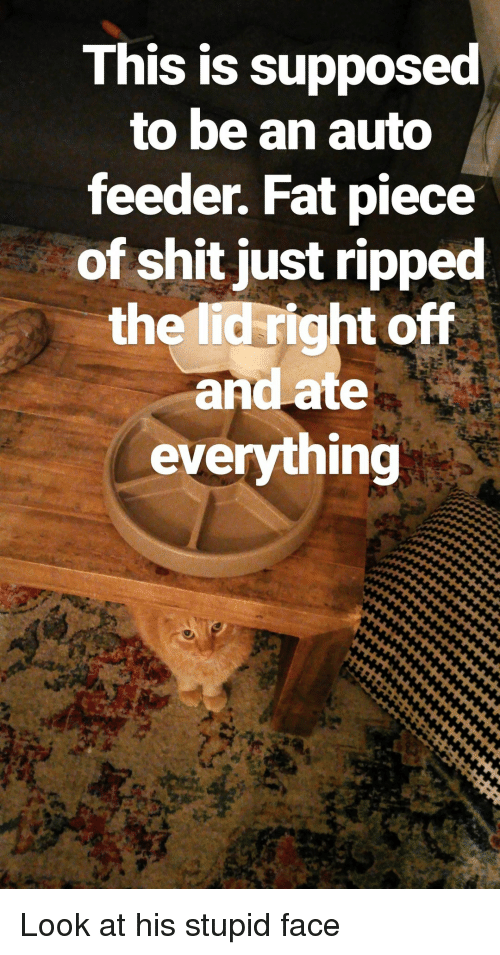 feeder: This is supposed  to be an auto  feeder. Fat piece  of shit just ripped  the lid right off  and ate  everything Look at his stupid face