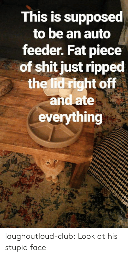 feeder: This is supposed  to be an auto  feeder. Fat piece  of shit just ripped  the lid right off  and ate  everything laughoutloud-club:  Look at his stupid face