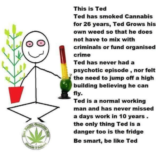 psychotic: This is Ted  Ted has smoked Cannabis  for 26 years, Ted Grows his  own weed so that he does  not have to mix with  criminals or fund organised  crime  Ted has never had a  psychotic episode, nor felt  the need to jump off a high  building believing he can  fly.  Ted is a normal working  man and has never missed  a days work in 10 years.  the only thing Ted is a  danger too is the fridge  Be smart, be like Ted