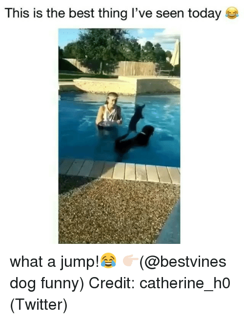 Funny, Memes, and Twitter: This is the best thing I've seen today what a jump!😂 👉🏻(@bestvines dog funny) Credit: catherine_h0 (Twitter)