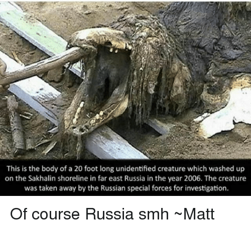 special forces: This is the body of a 20 foot long unidentified creature which washed up  on the Sakhalin shoreline in far east Russia in the year 2006. The creature  was taken away by the Russian special forces for investigation. Of course Russia smh ~Matt