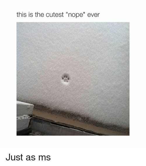 """Cutest Nope Ever: this is the cutest """"nope"""" ever Just as ms"""