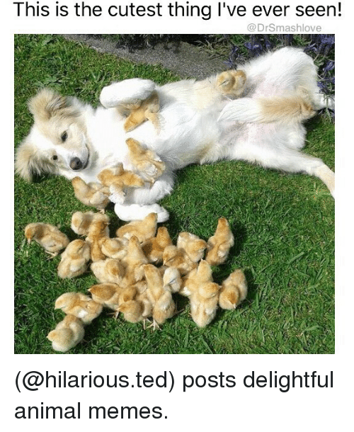 Funniest Meme I Ve Seen Reddit : This is the cutest thing i ve ever seen posts delightful