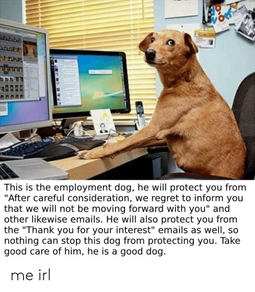 """employment: This is the employment dog, he will protect you from  """"After careful consideration, we regret to inform you  that we will not be moving forward with you"""" and  other likewise emails. He will also protect you from  the """"Thank you for your interest"""" emails as well, so  nothing can stop this dog from protecting you. Take  good care of him, he is a good dog. me irl"""