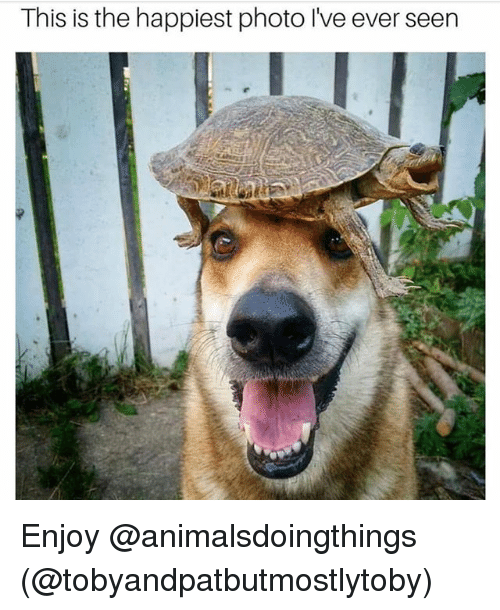 Dank Memes, Photo, and This: This is the happiest photo lve ever seen Enjoy @animalsdoingthings (@tobyandpatbutmostlytoby)