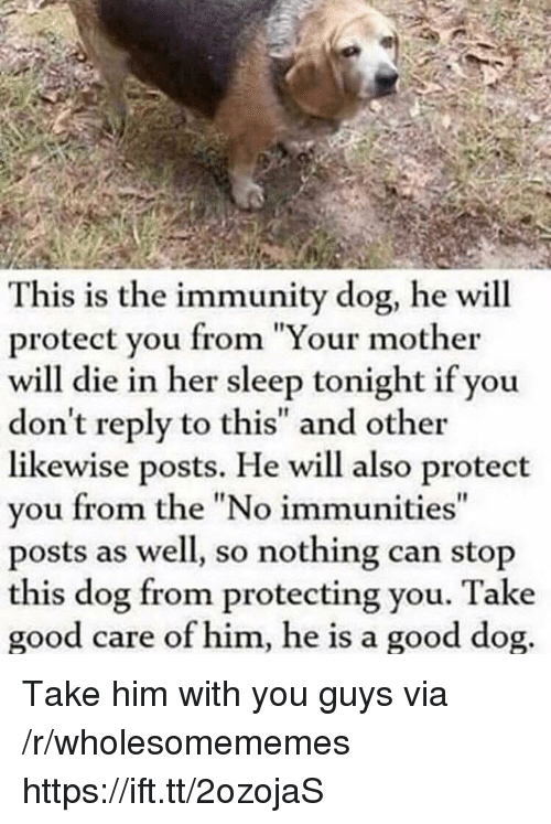 "Good, Sleep, and Her: This is the immunity dog, he will  protect you from ""Your mother  will die in her sleep tonight if you  don't reply to this"" and other  likewise posts. He will also protect  you from the ""No immunities  posts as well, so nothing can stop  this dog from protecting you. Take  good care of him, he is a good dog Take him with you guys via /r/wholesomememes https://ift.tt/2ozojaS"