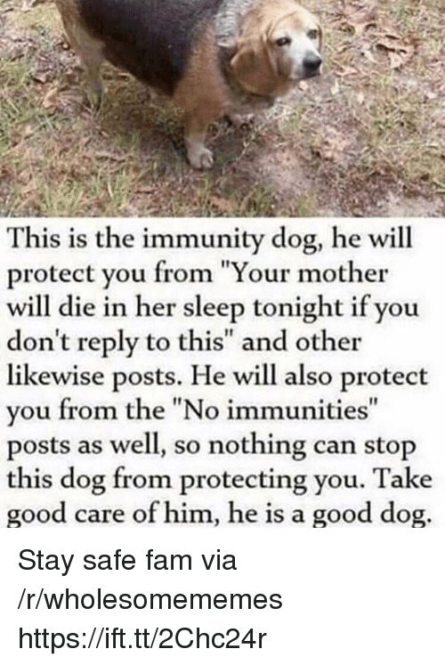 "Fam, Good, and Sleep: This is the immunity dog, he will  protect you from ""Your mother  will die in her sleep tonight if you  don't reply to this"" and other  likewise posts. He will also protect  you from the ""No immunities  posts as well, so nothing can stop  this dog from protecting you. Take  good care of him, he is a good dog Stay safe fam via /r/wholesomememes https://ift.tt/2Chc24r"