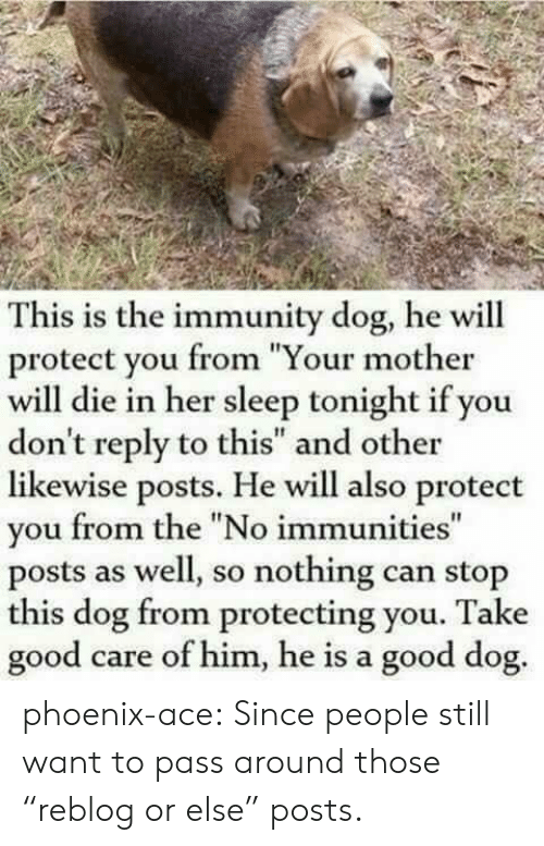 "Protect You: This is the immunity dog, he will  protect you from ""Your mother  will die in her sleep tonight if you  don't reply to this"" and other  likewise posts. He will also protect  you from the ""No immunities""  posts as well, so nothing can stop  this dog from protecting you. Take  good  care of him, he is a good dog. phoenix-ace:  Since people still want to pass around those ""reblog or else"" posts."