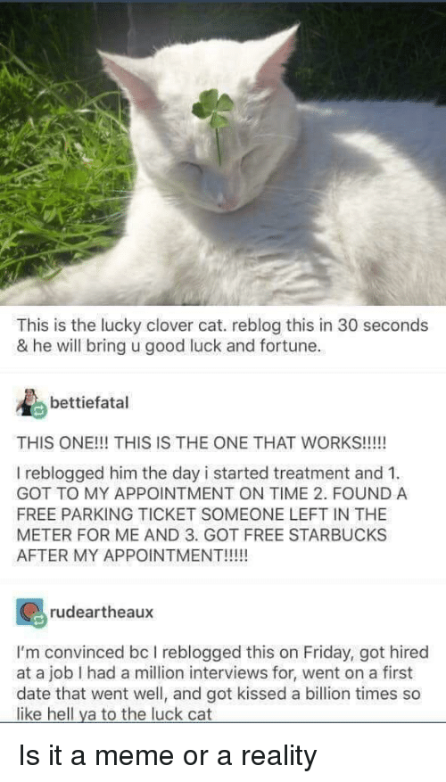clover: This is the lucky clover cat. reblog this in 30 seconds  & he will bring u good luck and fortune.  bettiefatal  THIS ONE!!! THIS IS THE ONE THAT WORKS!!!!!  I reblogged him the day i started treatment and 1  GOT TO MY APPOINTMENT ON TIME 2. FOUND A  FREE PARKING TICKET SOMEONE LEFT IN THE  METER FOR ME AND 3. GOT FREE STARBUCKS  AFTER MY APPOINTMENT!!!  rudeartheaux  I'm convinced bc I reblogged this on Friday, got hired  at a job I had a million interviews for, went on a first  date that went well, and got kissed a billion times so  like hell ya to the luck cat Is it a meme or a reality
