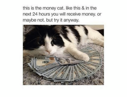 money cat: this is the money cat. like this & in the  next 24 hours you will receive money. or  maybe not. but try it anyway.
