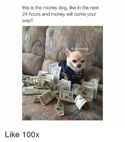 Money Dog: this is the money dog, like in the next  24 hours and money will come your  Way  @comme Like 100x
