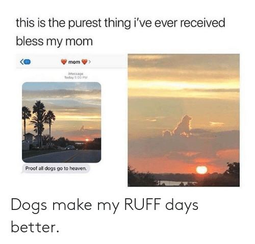 all dogs: this is the purest thing i've ever received  bless my mom  Message  Today 5 00 PM  Proof all dogs go to heaven. Dogs make my RUFF days better.