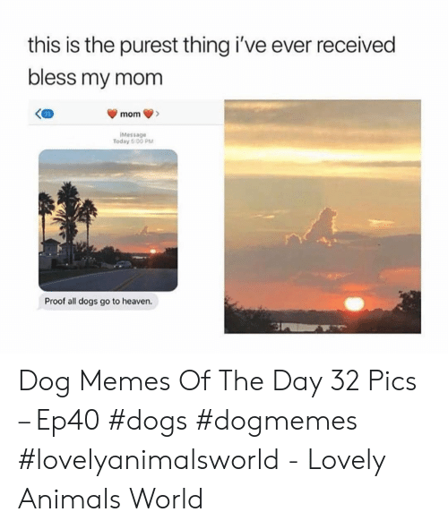 all dogs: this is the purest thing i've ever received  bless my mom  mom  iMessage  Today 5:0O PM  Proof all dogs go to heaven. Dog Memes Of The Day 32 Pics – Ep40 #dogs #dogmemes #lovelyanimalsworld - Lovely Animals World