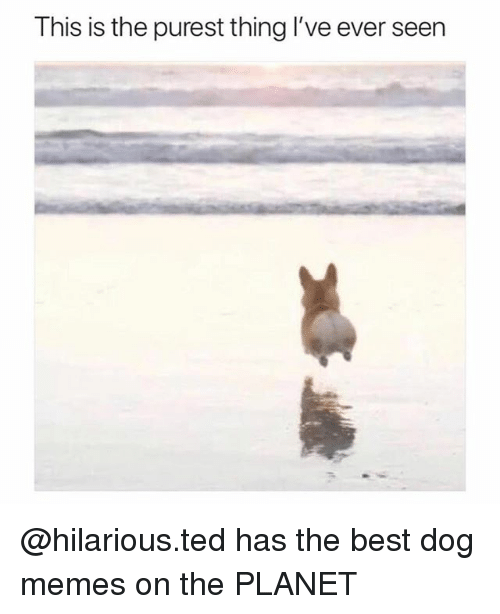 Funny, Memes, and Ted: This is the purest thing l've ever seen @hilarious.ted has the best dog memes on the PLANET