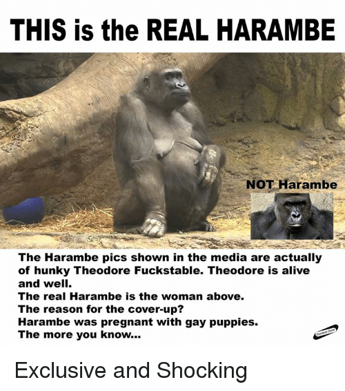 Alive, Pregnant, and Puppies: THIS is the REAL HARAMBE  NOT Harambe  The Harambe pics shown in the media are actually  of hunky Theodore Fuckstable. Theodore is alive  and well.  The real Harambe is the woman above.  The reason for the cover-up?  Harambe was pregnant with gay puppies.  The more you know... Exclusive and Shocking