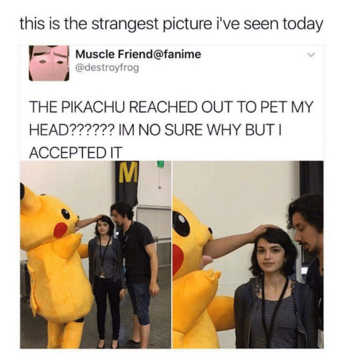 muscle: this is the strangest picture i've seen today  Muscle Friend@fanime  @destroyfrog  THE PIKACHU REACHED OUT TO PET MY  HEAD?????? IM NO SURE WHY BUT I  ACCEPTED IT