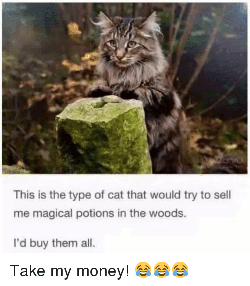 Money, Cat, and Them: This is the type of cat that would try to sell  me magical potions in the woods.  I'd buy them all. Take my money! 😂😂😂
