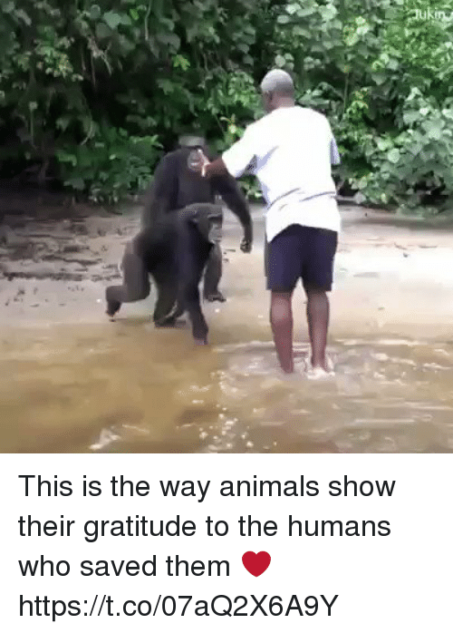 Animals, Memes, and 🤖: This is the way animals show their gratitude to the humans who saved them ❤️ https://t.co/07aQ2X6A9Y