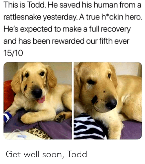 recovery: This is Todd. He saved his human from a  rattlesnake yesterday. A true h*ckin hero.  He's expected to make a full recovery  and has been rewarded our fifth ever  15/10 Get well soon, Todd