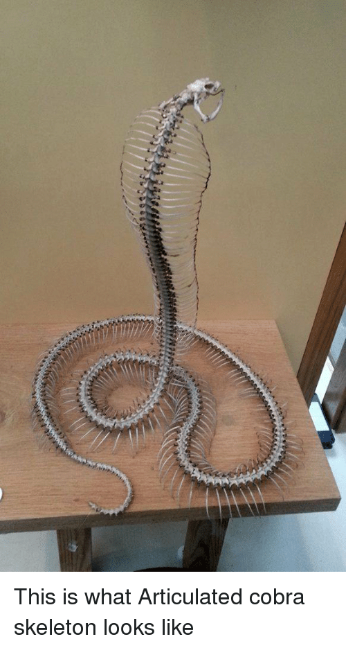 Memes, 🤖, and Cobra: This is what Articulated cobra skeleton looks like