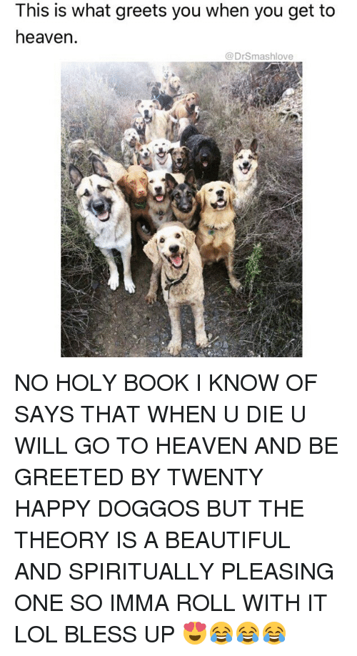 Beautiful, Bless Up, and Heaven: This is what greets you when you get to  heaven  @DrSmashlove NO HOLY BOOK I KNOW OF SAYS THAT WHEN U DIE U WILL GO TO HEAVEN AND BE GREETED BY TWENTY HAPPY DOGGOS BUT THE THEORY IS A BEAUTIFUL AND SPIRITUALLY PLEASING ONE SO IMMA ROLL WITH IT LOL BLESS UP 😍😂😂😂