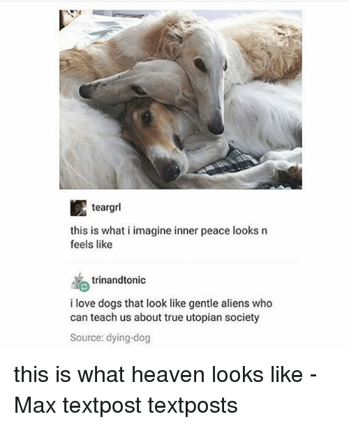 what i imagine: this is what i imagine inner peace looks n  feels like  trinandtonic  i love dogs that look like gentle aliens who  can teach us about true utopian society  Source: dying-dog this is what heaven looks like - Max textpost textposts