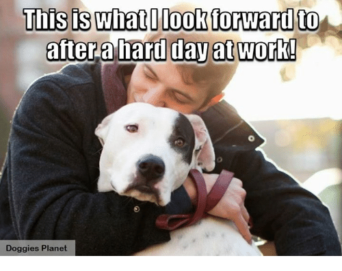 Memes, Planets, and 🤖: This is what look forward to  after hard day at work!  Doggies Planet