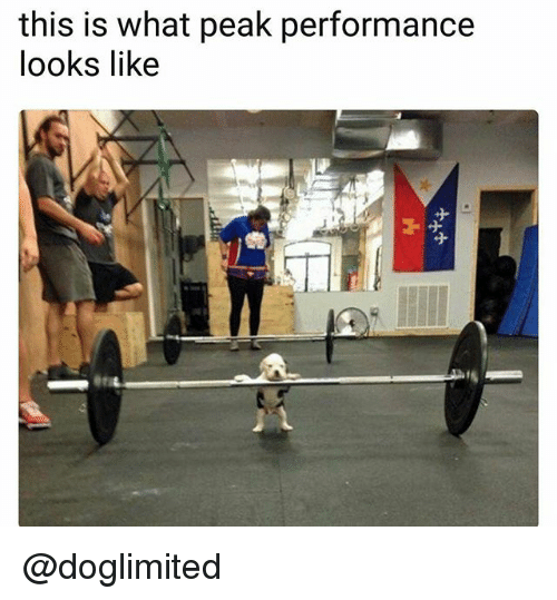 Dank Memes, What, and This: this is what peak performance  looks like @doglimited