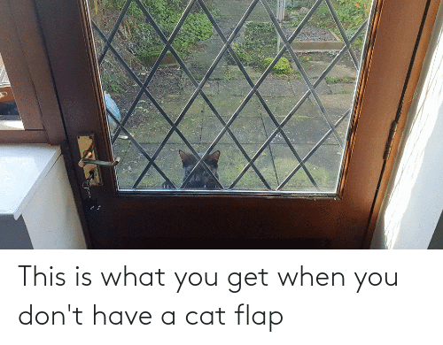 flap: This is what you get when you don't have a cat flap