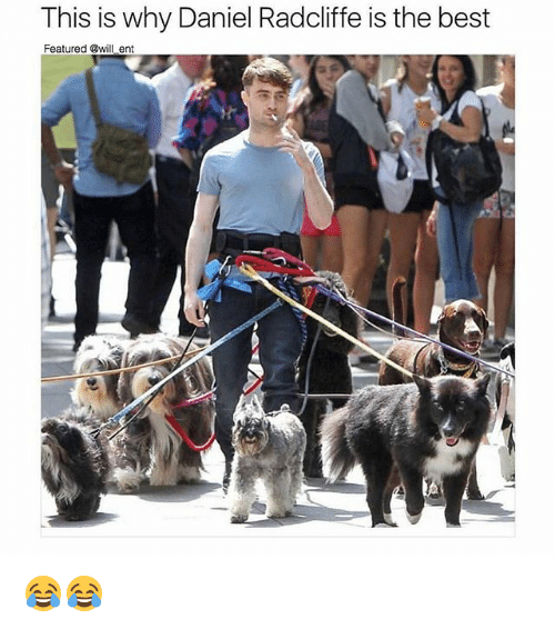 Daniel Radcliffe, Memes, and Best: This is why Daniel Radcliffe is the best  Featured @will ent 😂😂