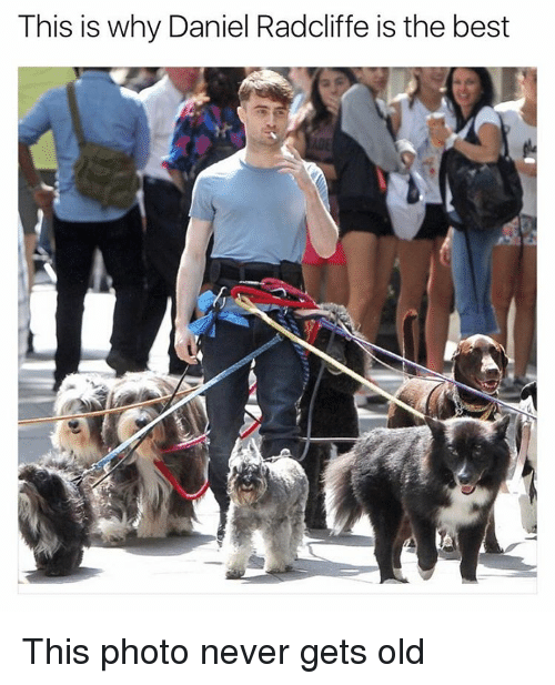Daniel Radcliffe, Funny, and Meme: This is why Daniel Radcliffe is the best This photo never gets old