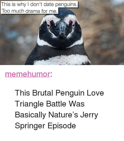 """Jerry Springer: This is why don't date penguins.  Too much drama for me <p><a href=""""http://memehumor.tumblr.com/post/152876204963/this-brutal-penguin-love-triangle-battle-was"""" class=""""tumblr_blog"""">memehumor</a>:</p>  <blockquote><p>This Brutal Penguin Love Triangle Battle Was Basically Nature's Jerry Springer Episode</p></blockquote>"""