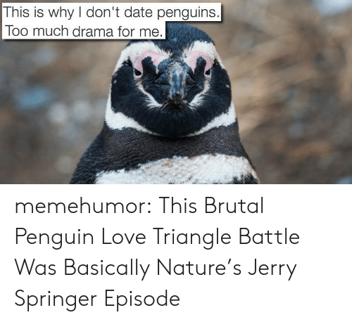 Jerry Springer: This is why don't date penguins.  Too much drama for me memehumor:  This Brutal Penguin Love Triangle Battle Was Basically Nature's Jerry Springer Episode