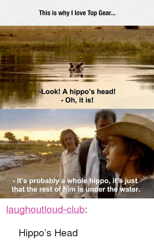 "hippos: This is why I love Top Gear.  -Look! A hippo's head!  - Oh, it is!  -It's probably a whole hippo, it's just  that the rest offhim is under the water. <p><a href=""http://laughoutloud-club.tumblr.com/post/172128806821/hippos-head"" class=""tumblr_blog"">laughoutloud-club</a>:</p>  <blockquote><p>Hippo's Head</p></blockquote>"