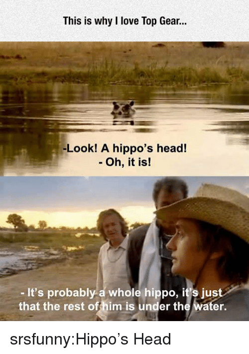 hippos: This is why I love Top Gear.  -Look! A hippo's head!  - Oh, it is!  -It's probably a whole hippo, it's just  that the rest offhim is under the water. srsfunny:Hippo's Head