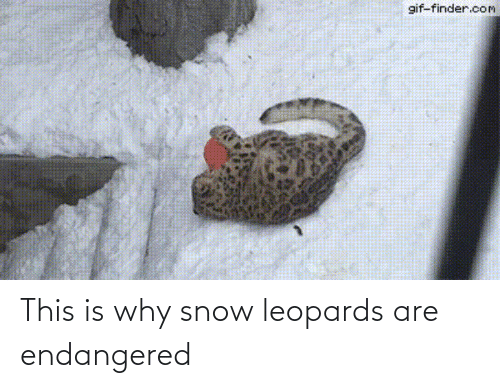 Snow: This is why snow leopards are endangered