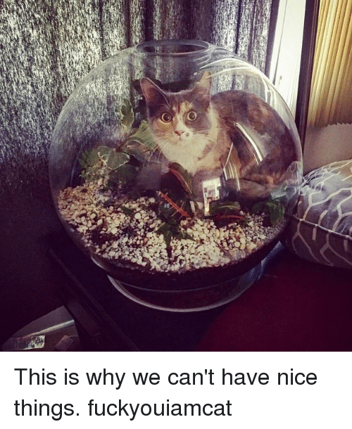 Nice: This is why we can't have nice things. fuckyouiamcat