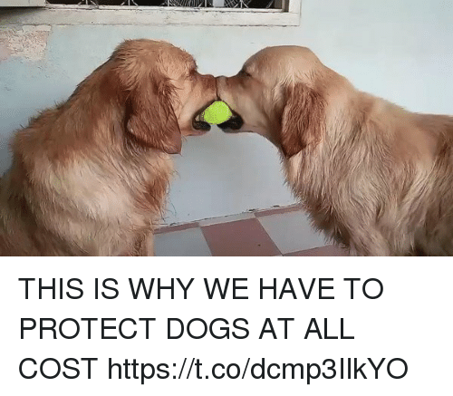 Dogs, Girl Memes, and Why: THIS IS WHY WE HAVE TO PROTECT DOGS AT ALL COST https://t.co/dcmp3IlkYO