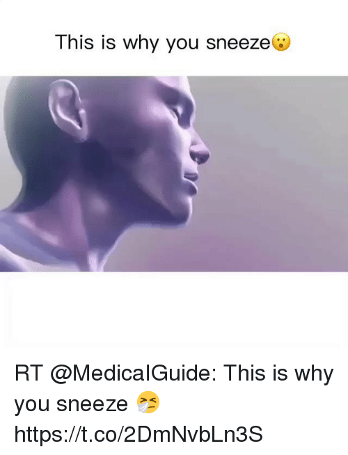 Memes, 🤖, and Why: This is why you sneeze@  IS IS RT @MedicaIGuide: This is why you sneeze 🤧 https://t.co/2DmNvbLn3S