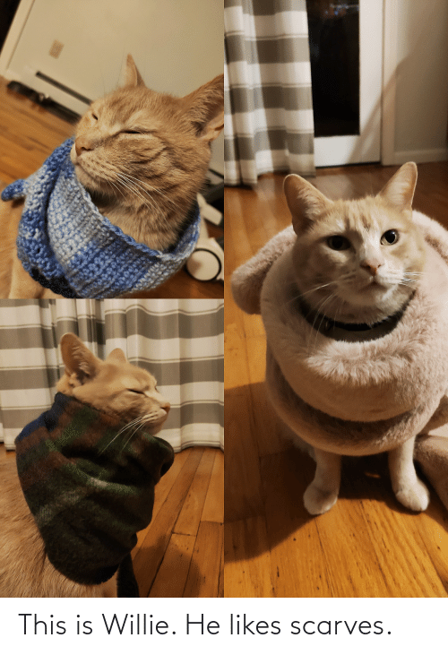 willie: This is Willie. He likes scarves.