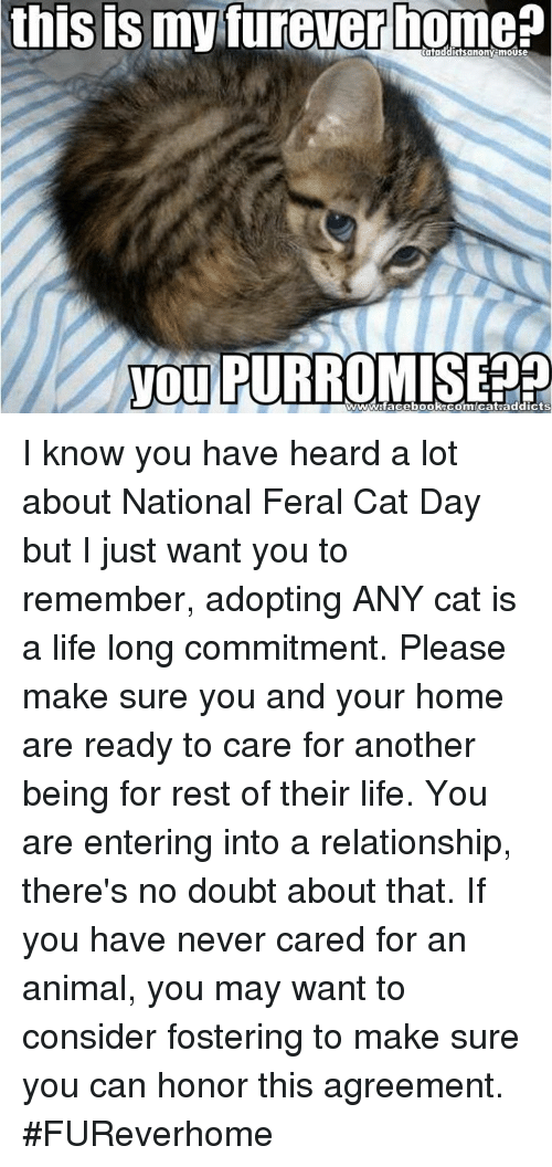 Animals, Anime, and Cats: this ISmy furever nome  you wwwww!facebook Com Cat addicts I know you have heard a lot about National Feral Cat Day but I just want you to remember, adopting ANY cat is a life long commitment. Please make sure you and your home are ready to care for another being for rest of their life. You are entering into a relationship, there's no doubt about that. If you have never cared for an animal, you may want to consider fostering to make sure you can honor this agreement. #FUReverhome