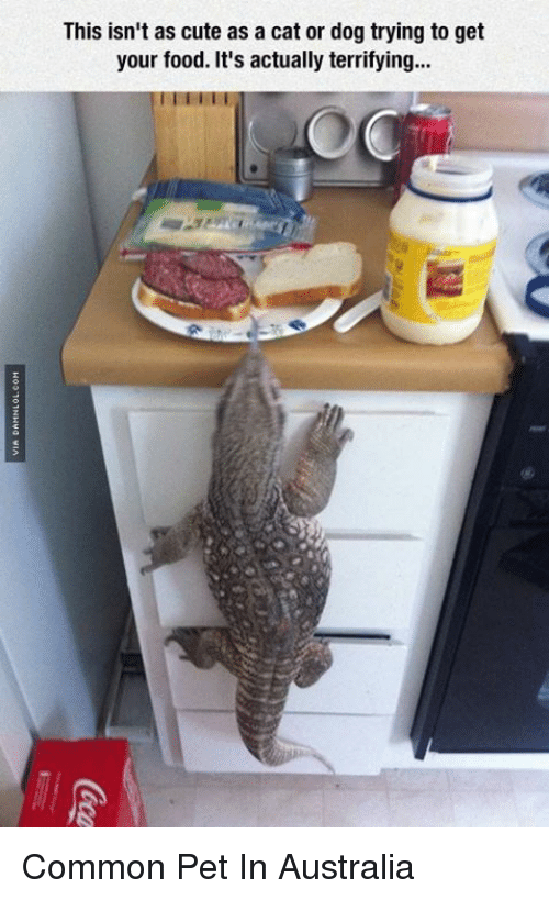 Cute, Food, and Memes: This isn't as cute as a cat or dog trying to get  your food. It's actually terrifying... Common Pet In Australia