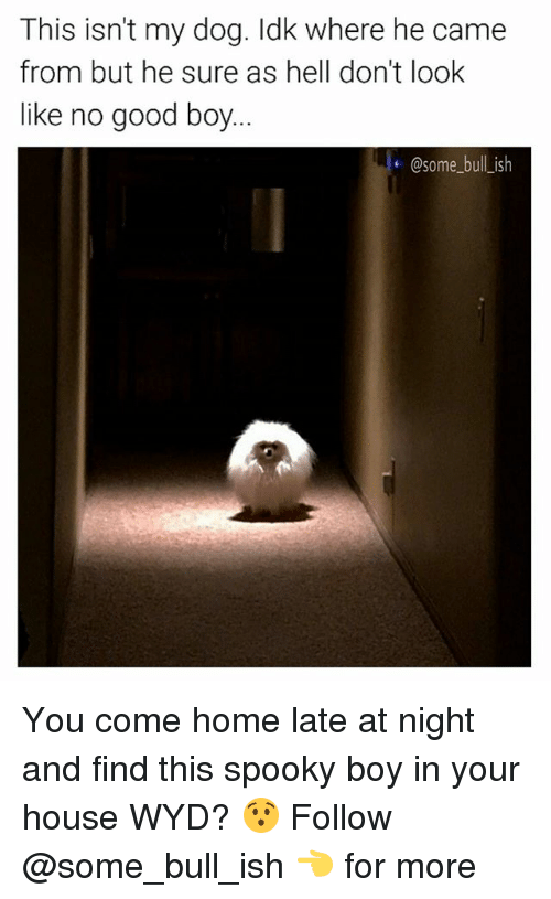Memes, Wyd, and Good: This isn't my dog. Idk where he came  from but he sure as hell don't look  like no good boy.  @some bull ish You come home late at night and find this spooky boy in your house WYD? 😯 Follow @some_bull_ish 👈 for more