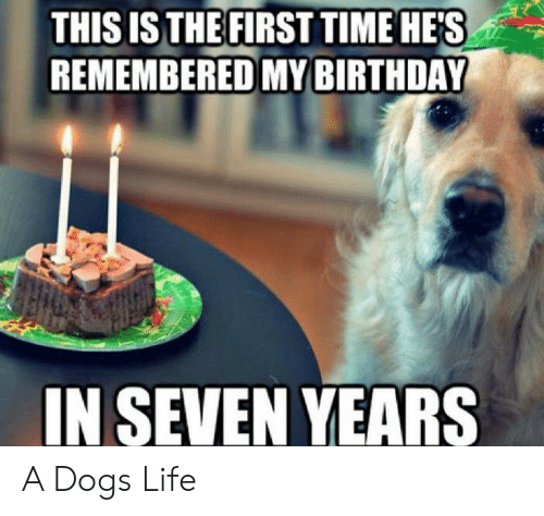 Birthda: THIS ISTHE FIRST TIME HE'S  REMEMBERED MY BIRTHDA  IN SEVEN YEARS A Dogs Life