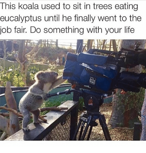 Koalaing: This koala used to sit in trees eating  eucalyptus until he finally went to the  job fair. Do something with your life