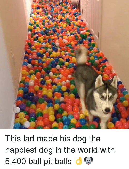 Dank, World, and 🤖: This lad made his dog the happiest dog in the world with 5,400 ball pit balls 👌🐶