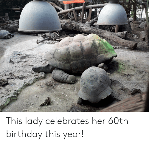 60th birthday: This lady celebrates her 60th birthday this year!
