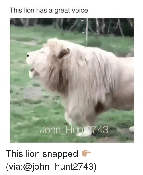 Funny, Lion, and Voice: This lion has a great voice  John Hun 743 This lion snapped 👉🏽(via:@john_hunt2743)